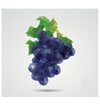 Geometric polygonal fruit triangles grapes vector image