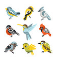 small bird species sparrows and hummingbirds set vector image