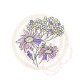 hand drawn chamomile isolated vector image