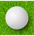 golf ball on grass vector image vector image