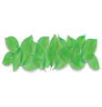 green leaves close-up on white background vector image
