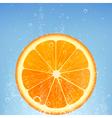 orange in water vector image vector image