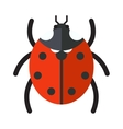 Cute cartoon ladybug insect isolated on vector image