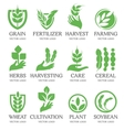 Isolated abstract green color wheat ear logo vector image