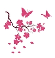twig cherry blossoms and butterflies vector image