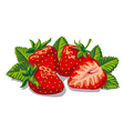 fresh ripe strawberries vector image vector image