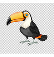 cute toucan bird on transparent background vector image