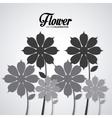 Flower of garden design vector image