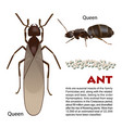 real ant insect vector image