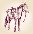 horse hand drawn llustration realistic vector image vector image