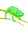 green chameleon on brown branch vector image