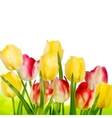 Beautiful tulips isolated on white EPS 10 vector image