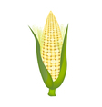 Fresh Sweet Ears of Corn with Husk and Silk vector image