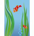 anemone fish vector image