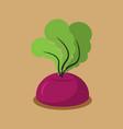 beet growing isolated fresh vegetables in garden vector image