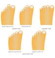 Toe shape vector image