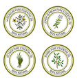 set of essential oil labels hypericum lemon vector image