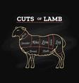 lamb butcher chalkboard scheme vector image