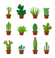 set of desert or room green cactus flat and vector image