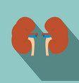 human kidney icon with shadow vector image