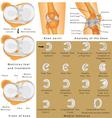 Anatomy of the Knee vector image