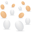 Eggs on white background vector image