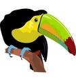toukan vector vector image vector image