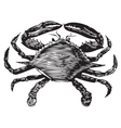 Blue Crab engraving vector image