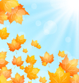 Autumn Background with Flying Maple vector image vector image
