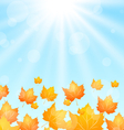 Autumn Flying Maples in Blue Sky vector image vector image