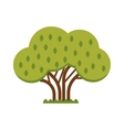 Green tree full of red apple garden summer organic vector image