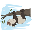 Panda on a tree vector image