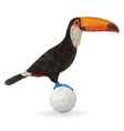 Cute Toucan Sitting on a Ball vector image vector image
