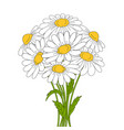 beautiful daisies on white background vector image