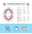 childrens primary teeth schedule of baby teeth vector image