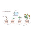 growing stages of potted plant - seeding sprout vector image
