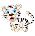 cute baby white tiger walking vector image vector image