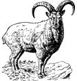 torus coucasica vector image