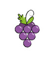 delicious and healthy grape fruit vector image