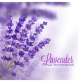 Lavender Flower Background vector image