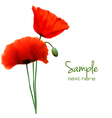 red poppy card vector image