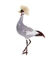 Crowned crane vector image