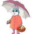 rabbit with umbrella vector image