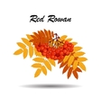 Autumn branch of rowan leaves and berries vector image