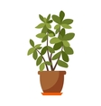 Indoor plant isolated vector image