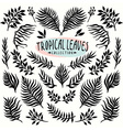 ink drawn leaves collection vector image