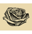 hand draw sketch rose vector image