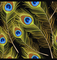 seamless peacock feathers vector image