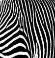 zebra pattern large vector image
