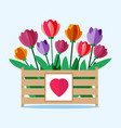 wooden box with colored tulips vector image